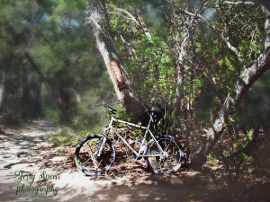 bicycle-in-cameron-park-in-the-woods-recovered