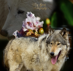 macro-shot-of-flowers-and-sabine-and-zoerro-wolves