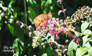 50mm-closeup-of-orange-butterfly-900-065
