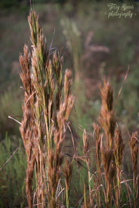 a-mode-f4-early-morning-grasses-bokeh-900-004