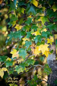 fall-colors-900-032