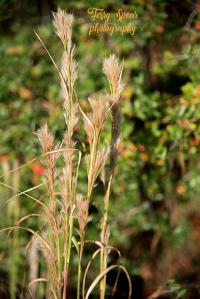 grasses-aganst-berry-bokeh-on-walk-900-005