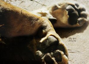 lion-huge-paws-cameron-park-zoo-900