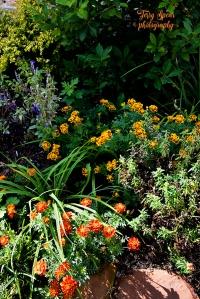 mum-orange-and-yellow-and-purple-flowers-900