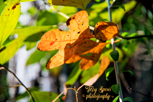 orange-fall-leaf-in-shadow-900-007