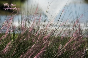 park-walk-pink-grasses-water-fountain-900-003