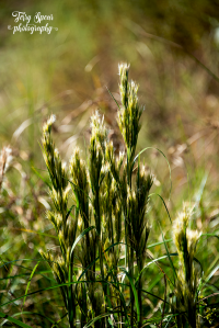 wild-grasses-great-bokeh-900-041
