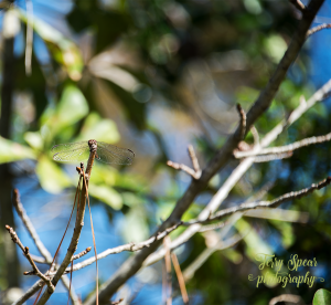 dragonfly-against-green-backdrop-900-029
