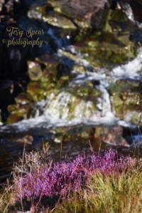 heather-creek-scotland-427x640-2