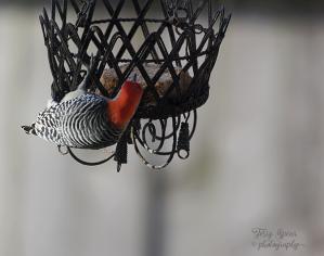 woodpecker-900-019