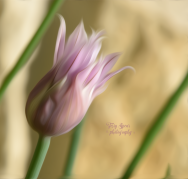 garlic-chives-flower-in-oil-paint-900_8733