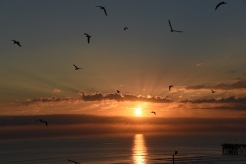 sunrise-the-birds-3-800x534