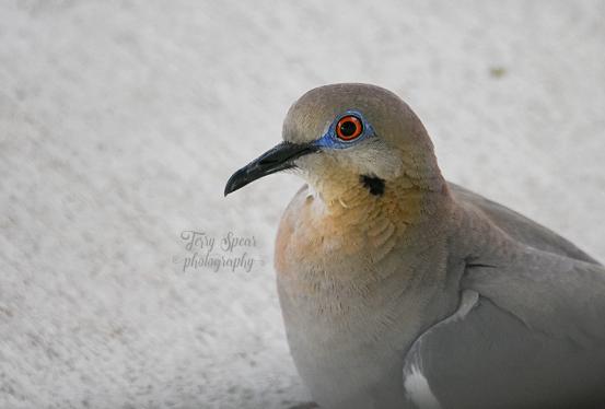 closeup-dove-900-036