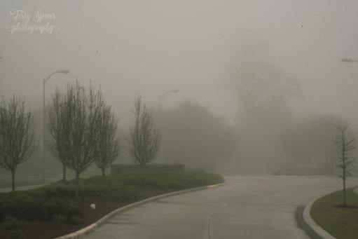 fog, 900 026