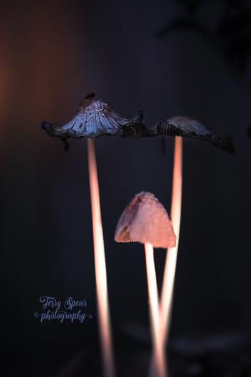 mushroom magic 900_9489