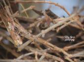 baby caridnal in nest 900