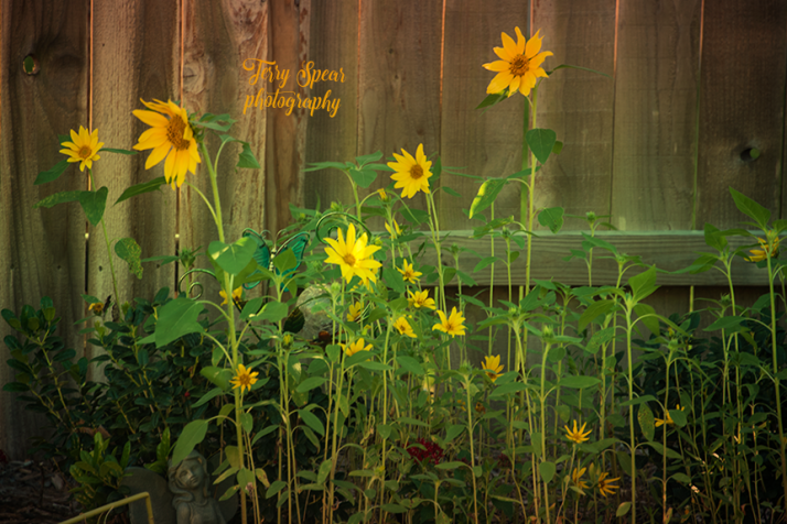garden of sunflowers gradient 900 009