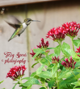 hummingbird tripod outside 900 273