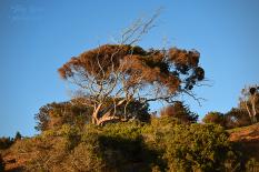 Beautiful trees 900 San Diego 758