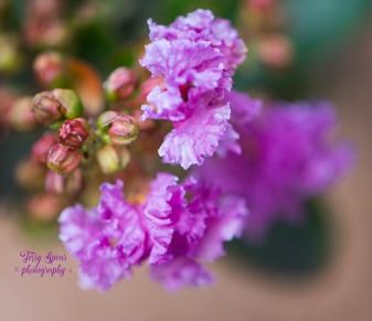 macro flowers Purple Magic 900 045