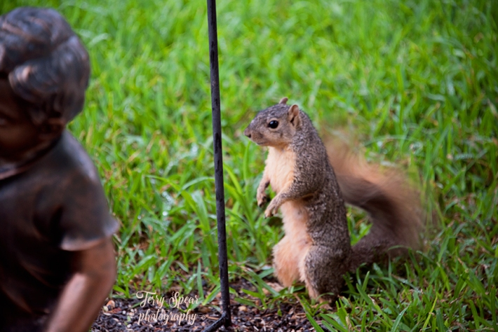 squirrel standing900 032