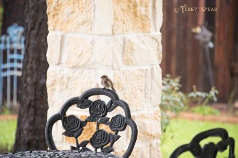 Hurricane Harvey storms sparrow 900 010