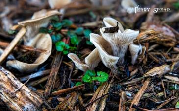 mushrooms in swirls 900