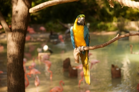 Parrot at the Dallas Zoo