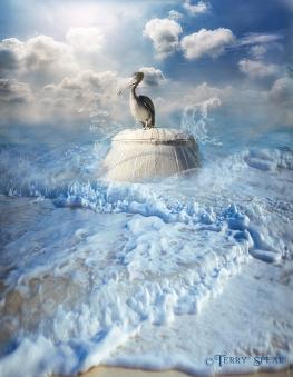 pelican Cameron Park Zoo in water composite 900 3 054