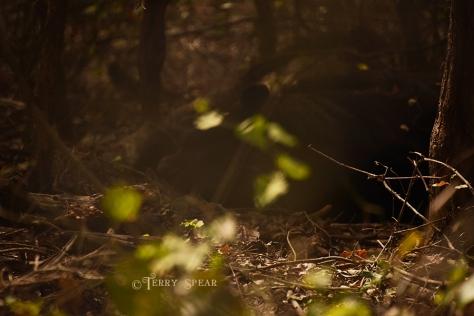 black bear in big enclosure sleeping 900 2319