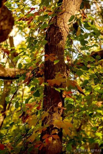 fall colors wetlands 900 419