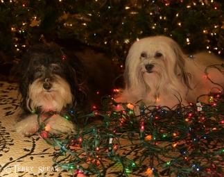 Max and Tanner Christmas lights 900 038