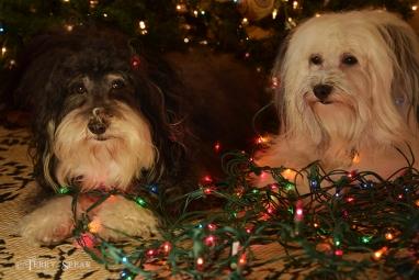 Max and Tanner Christmas lights 900 047