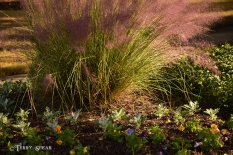 pink grasses and flowers 900 440