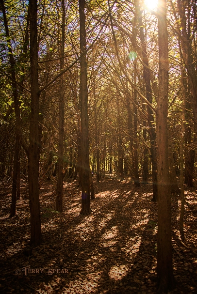sun shining through the forest 900 spookier woods 202