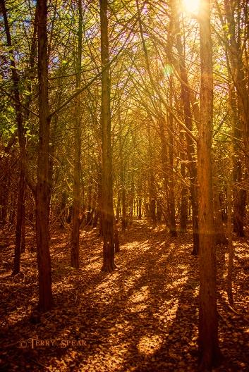 sun shining through the forest 900 sunnier woods 202