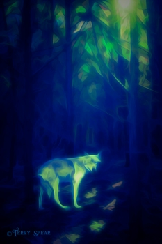 sun shining through the forest 900 wolf blue and green surrealistic woods 202