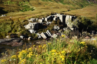 gorse heather and a stream 900 Scotland 2015 September 7339 (640x427)