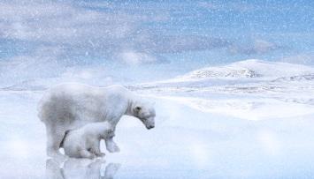 polar-bears-2800429