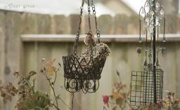 freezing rain house wren 1000 6045