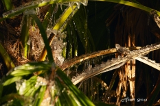palm fronds 1000 ice sculpture 050