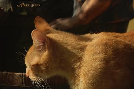 tabby cat eyes closed smelling birds 1000 008