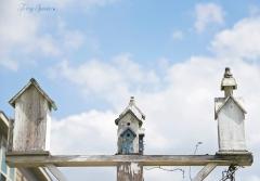 birdhouses and the blue sky 1000 018