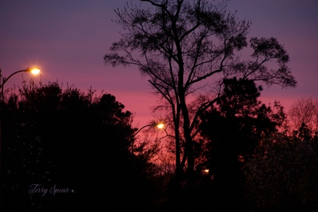 sunrise red 1000 043