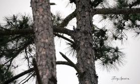 woodpecker 1000 002